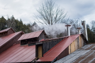 steam rising from sugarhouse